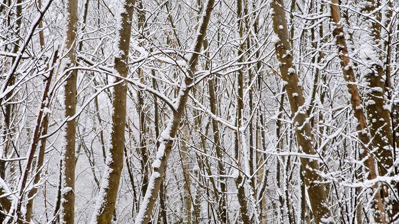 snowy frost snow holidays christmas winter pic