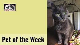 Pet of the Week: Cloud