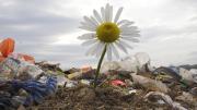 Flower growing at a dump site