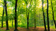 Green forest of trees