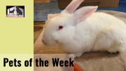 Milton Animal League Pet of the Weeks: Bunnies!
