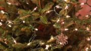 Christmas tree holidays. Copyright Melissa Fassel Dunn.