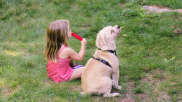Little girl with a dog in summer. Copyright Melissa Fassel Dunn