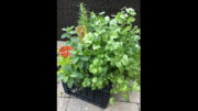 Plant with your neighbors at ester and Cedar Grove Gardens