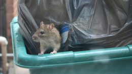 Do you have rodents on your property? Here's what to do.