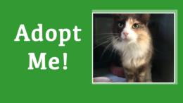 Meet Ash: Milton Animal Shelter