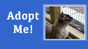 Head over to the Milton Animal Shelter to meet Mr. Muffin