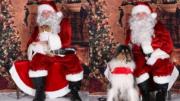 Santa to visit Milton Animal League Dec. 11