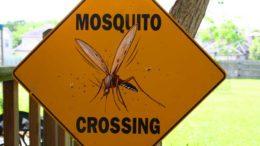Mosquito crossing