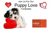 You and your pup are invited to a Yappy Hour fundraiser!