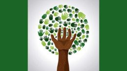 Tree, hands, togetherness