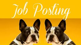 Job Posting: Office Manager at Comfy Cozy Pet Sitting