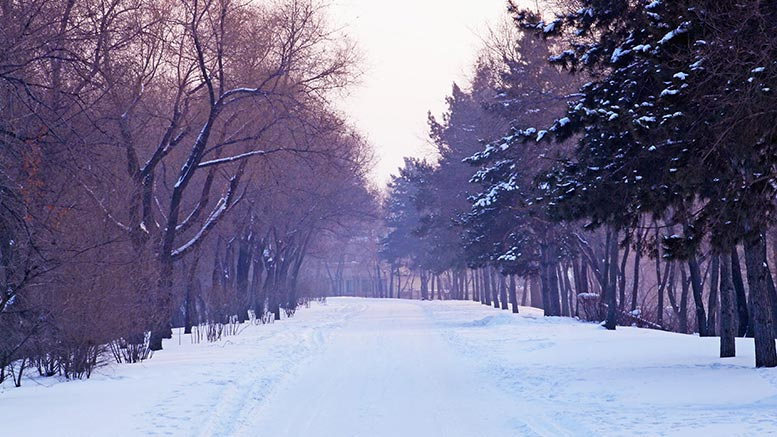 snowy winter road holidays christmas pic