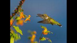 Bernard Creswick/Mass Audubon