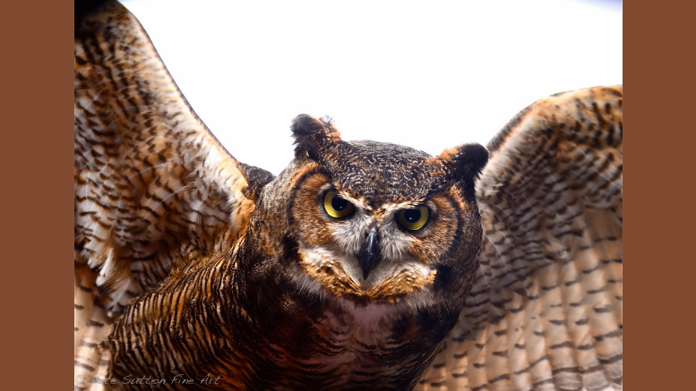 Audubon Owl Festival