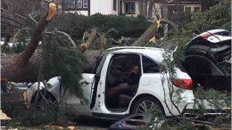 Milton MA Crash from tree / storm 2019