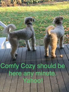 Comfy Cozy Pet Sitting, Milton, MA