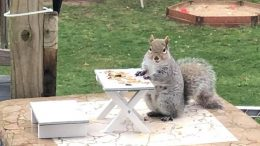 Milton resident builds patio furniture for squirrels to keep busy during quarantine