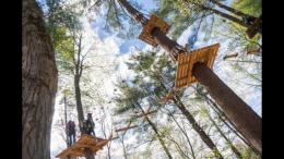 TreeTop Summer Social Distancing Activities