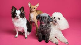 four dogs with a pink background